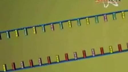 DNA复制、转录、翻译