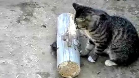 不管白猫、黑猫能抓老鼠就是好猫--