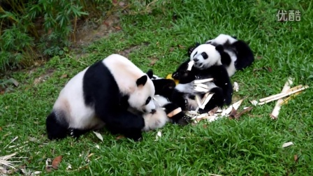 熊猫排排坐
