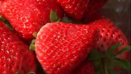 草莓种植新技术_草莓种植的前景_种植草莓苗