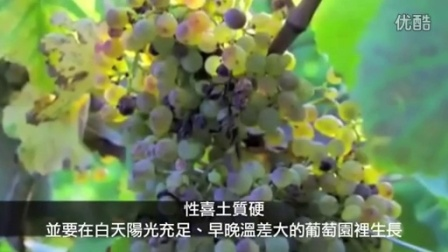Carpene Malvolti 卡沛妮酒莊 (Petit Manseng 繽紛氣泡酒) yidalipengren.cn stileitaliano