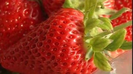 红颜草莓大棚种植技术_草莓的种植方法视频_有机草莓种植技术