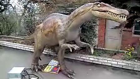 恐龙出租-重爪龙--博乐机器人表演