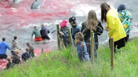 【发现最热视频】好残忍啊!实拍成群鲨鱼被傻逼赶到海滩上屠杀