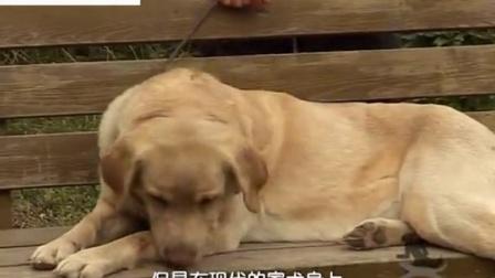 家有乖乖狗03-训练狗狗不在家中大小便
