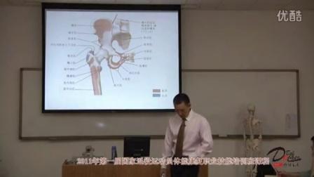 《髋关节的功能解剖》髋关节的滑囊和主要肌肉