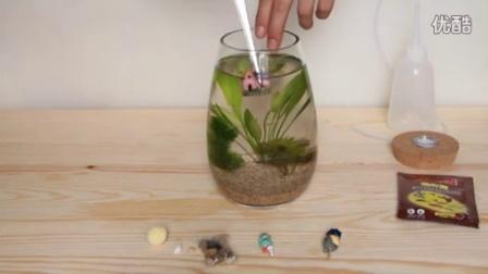【生态瓶】斗鱼鱼缸水族生态瓶水族箱diy制作视频教程