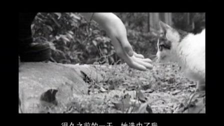 《她和她的猫》第24届中国金鸡百花电影节「映像·吉林」海峡两岸暨港澳青年微电影大赛参赛作品