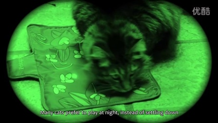 Petstages 夜光玩具 Nighttime Cat Toys