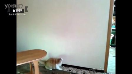 [K分享] 真是亲生!聪明主人帮超重肥猫减肥