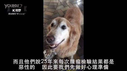 [K分享] 狗狗被诊断出没得癌症,她的反应会让你瞬间融化!