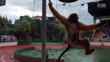 上海野生动物园动物明星的表演