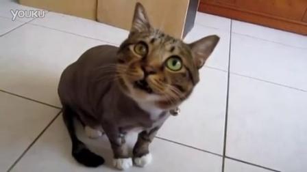 【You Tube奇趣精选】猫咪撒娇的叫声