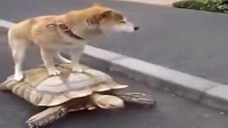 【You Tube奇趣精选】看狗狗如何欺负乌龟