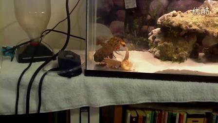 雀尾螳螂虾 Vs 小龙虾