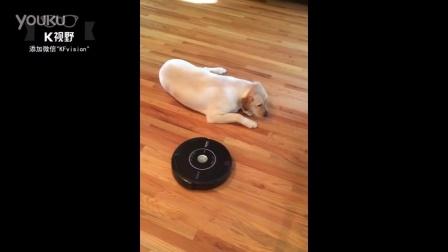 [K分享] 当扫地机器人遇到了一只懒狗