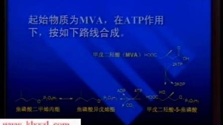 中国医科大学 天然药物化学 24讲  视频教程全套