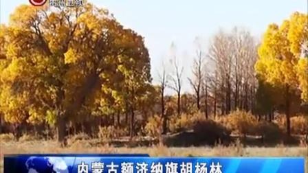 去内蒙古额济纳旗看胡杨林 新闻全方位 151001