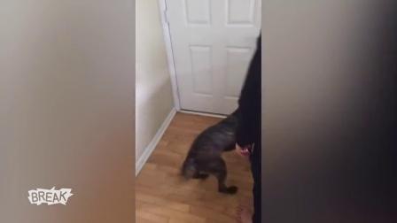 萌宠二货一箩筐 Shock and Paw - Breaking Videos