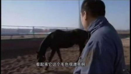 04-华丽转身 混血蒙古马走向赛场