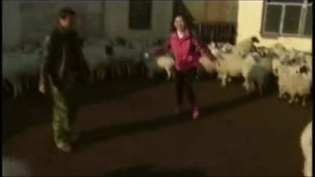 01-看尾巴来卖羊