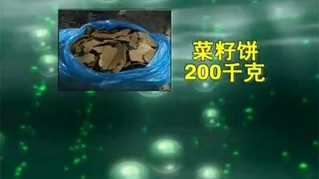 不出苗的牛粪双孢菇工厂化之牛粪双孢菇工厂化大棚种植模式