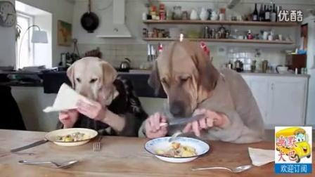超搞笑,宠物狗伉俪正在像绅士一样吃西式大餐