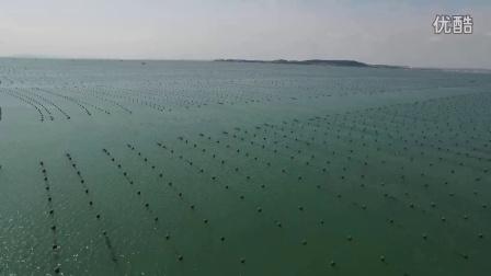 生财有道荣成海带——海芝宝