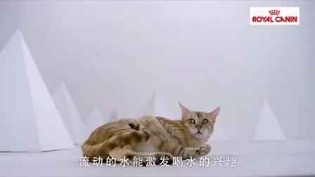 皇家奶膏:别看La就你了,皇家猫粮皇家猫粮皇家奶糕皇家奶膏