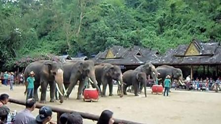 西双版纳野象谷观看大象表演之二:摇呼啦圈。