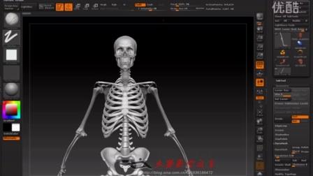 人体结构B_人体解剖学前必备知识