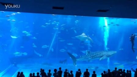 2015-10-26 冲绳美丽海水族馆最震撼的鲸鲨