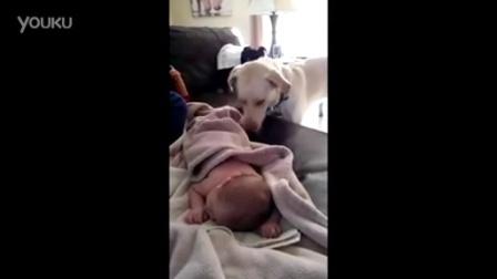 汪星人为宝宝盖被子 狗狗是人类最好的朋友  | Ranky  兰小奇