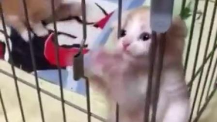 可爱的小喵星人,你绝对无法抗拒!! | Ranky  兰小奇