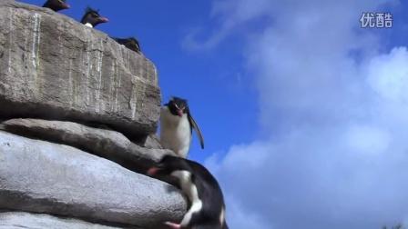 你知道在南极当一只企鹅有多难吗!