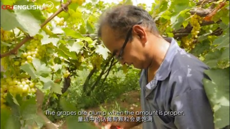 种葡萄的两兄弟 Stories of Xinjiang People-Brothers of the Vine