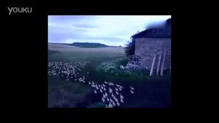 奇趣 通灵性的白鸭子