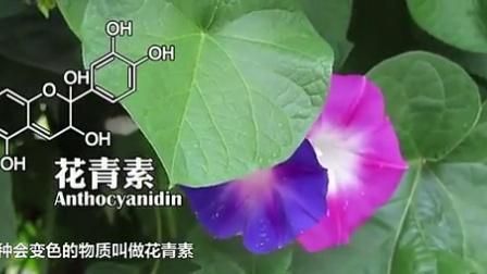 疯狂化学2:元素奇迹 真·凤舞九天-(颜色之美)