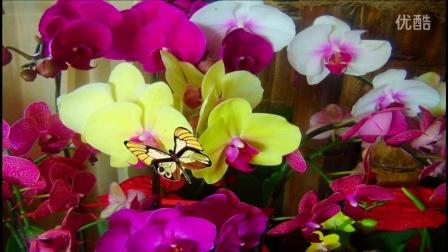 音画欣赏  向蝴蝶一样飞  图片制作动画