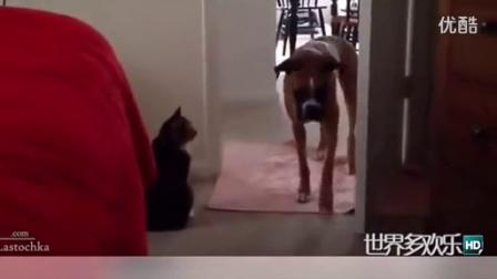 [MBVONE萌宠]最新搞笑狗狗猫咪超长集合-啊哈哈哈