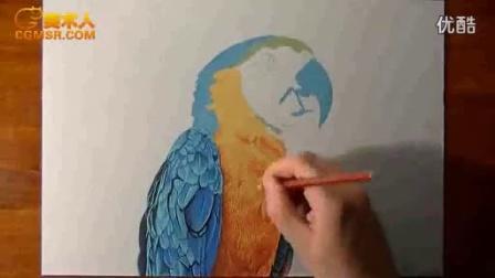 国外画家手绘金刚鹦鹉
