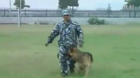 如何训练狗狗站立走路__教狗狗趴下的时候叫