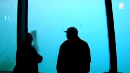 【发现最热视频】真凶猛!战斗种族北极熊砖砸玻璃想越狱