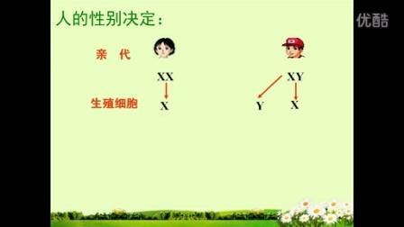 大庆市萨尔图区35-55中袁玉芬八年级《人的性别决定》