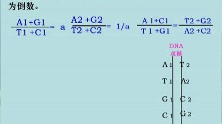 0044.高二生物文淑君第13讲 DNA分子的结构