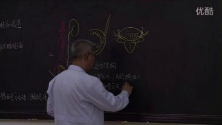 系统解剖学4-2