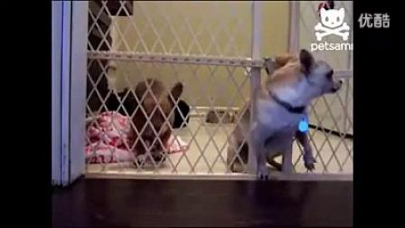 搞笑视频,狗狗要从门缝出来,结果把门卸下来了,哈哈