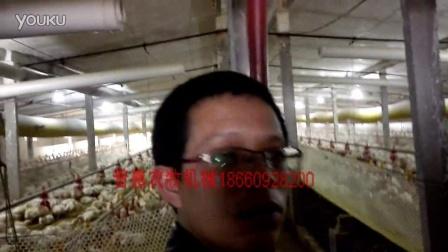 全封闭肉鸡养殖场养鸡设备出口肉鸡设备养鸡技术肉鸡养殖手册