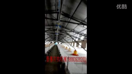 全封闭肉鸭养殖场养鸭设备养鸭技术樱桃谷sm3种鸭料线水线