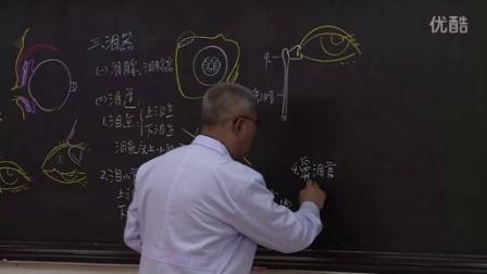 系统解剖学8-2